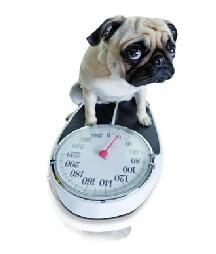 Ernährungsberatung Tierarztpraxis Raguhn