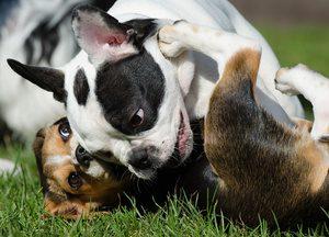 Welpen Tierarztpraxis Raguhn Dr. S. Unglaube