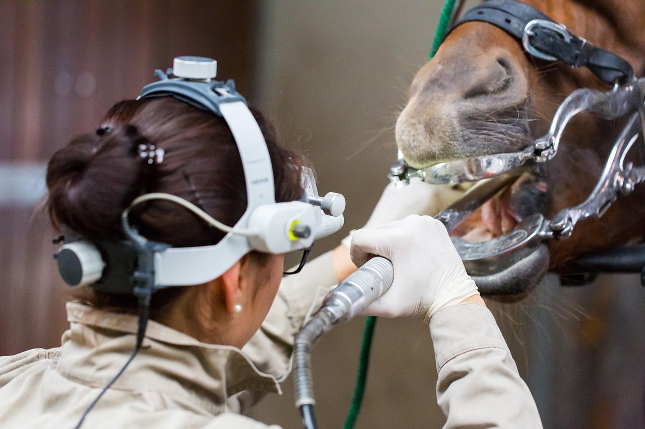veterinarian-mit-pferd-1701213_1280
