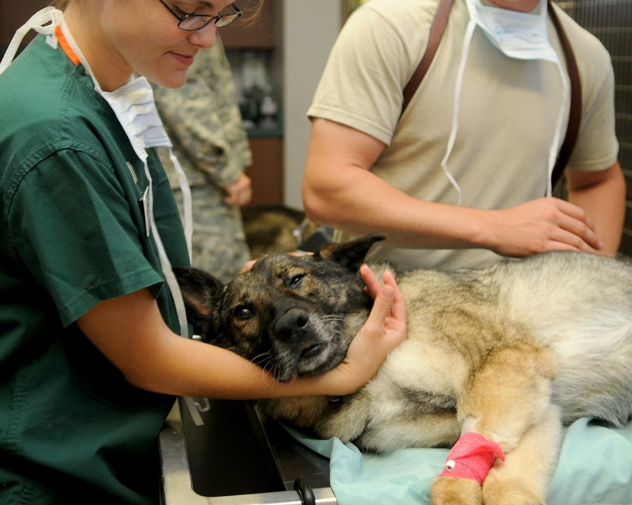 veterinary-hund-beim-arzt-85925_1280