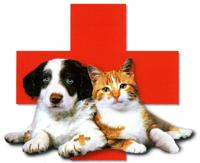 Tierarztpraxis Raguhn Erste Hilfe b. Hund und Katze