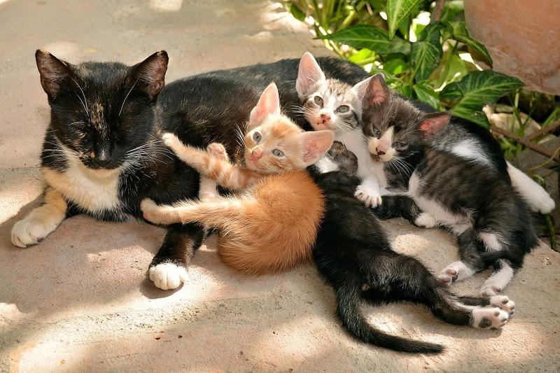 Katze mit Kätzchen Tierarztpraxis Raguhn Dr. S. Unglaube