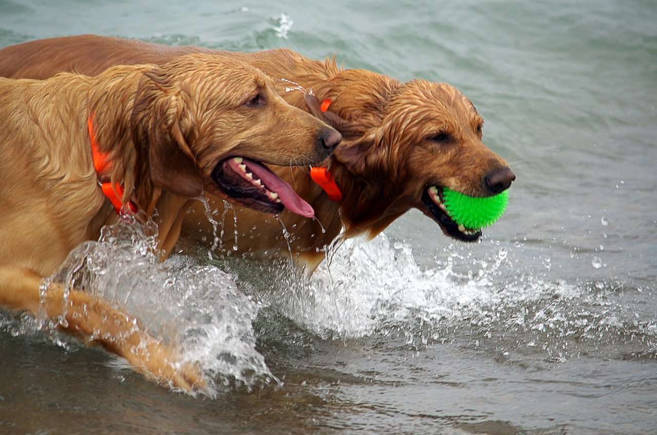 Hunde mit Ball Tierarztpraxis Raguhn Dr. S. Unglaube