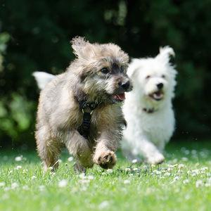 Junghundespielstunde Tierarztpraxis Raguhn