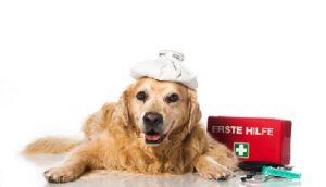 Erste Hilfe Hund Katze MAus
