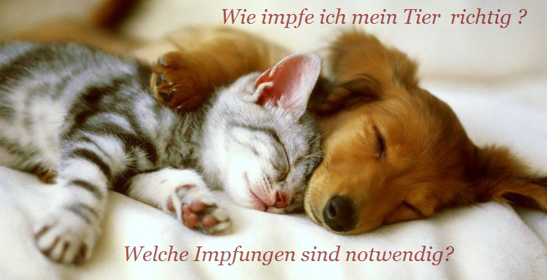 Hund und Katze schlafend Tierarzt Raguhn Dr. S. Unglaube