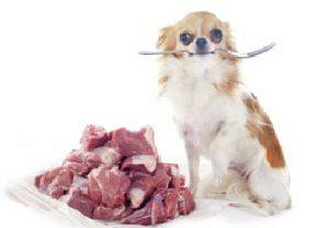 Hund mit Frischnahrung