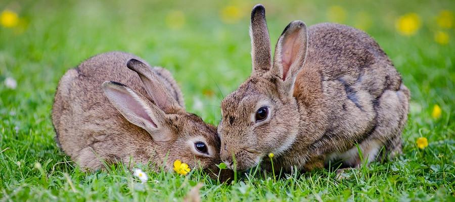 Kaninchen Tierarztpraxis Raguhn