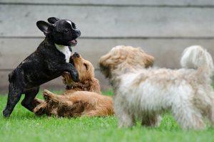 Welpen Spielstunde Tierarztpraxis Raguhn