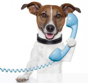 Service Telefon Tierarztpraxis Unglaube Raguhn