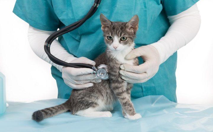 Katze Schutzimpfung Tierarztpraxis Raguhn